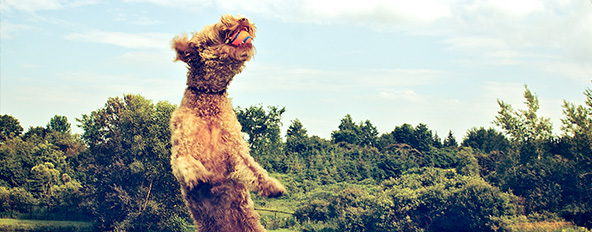 Bow Wow Country Club